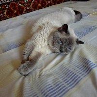 Кот Тимоша! :: Ирина