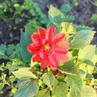 Цветок :: Aнна Зарубина