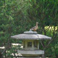 в Ботаническом саду... Японский сад... :: Татьяна Котова
