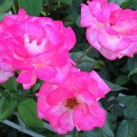 Ослепительная красота... :: Тамара (st.tamara)