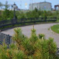 В парке... :: Mc!! .....