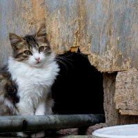Котик из Castelmola :: Людмила -