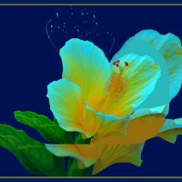 Ночные цветы :: Владимир Хатмулин