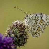 Пора бабочек :: Татьяна Степанова