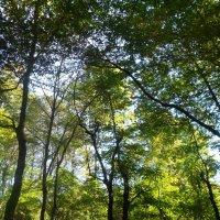 я с утра в лесу гуляю :: Лариса Добрякова