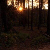 В лесу :: Aнна Зарубина