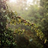 Дождь и солнце. :: Руслан