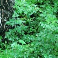 Зелёная краска лета :: Domna Kuznechic