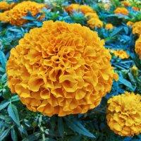 цветок :: Валерий Дворников