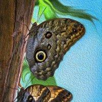 Бабочки -- Сова-Калиго. :: Барбара