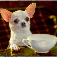 А мне чаю, что не надо? :: Leo Alex Photographer