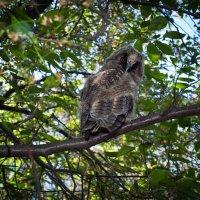 Owl :: Игорь Емельянов