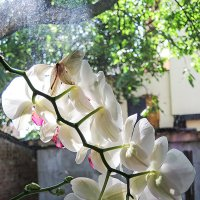 Орхидеи :: Юрий Муханов