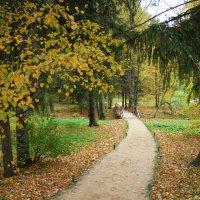 Осень в Пушкинских горах (этюд 4) :: Константин Жирнов
