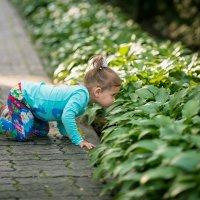 Запах травы :: Анастасия Шевелева