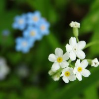 Белая и голубая :: Svetlana27