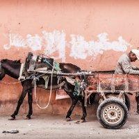 Марокканская :: Egor Vlasov