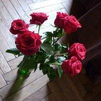 Розы дома 01 :: Татьяна Юрасова