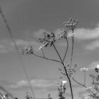 """Из серии """"Полевые цветы"""" :: Андрей Гусев"""