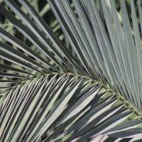 Пустынная растительность №1 :: Sh.E.V. n/a