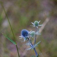 Цветок :: Евгений Мельников