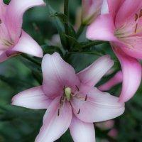 В саду цветочки :: Максим Максимов