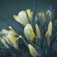 Весна :: Ivars RuSto