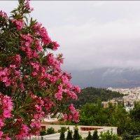Внизу Афины :: Наталия Григорьева
