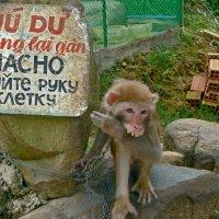 Прикольная обезьяна. :: Чария Зоя