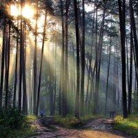 Лучи искристой дождевою пылью... :: Лесо-Вед (Баранов)