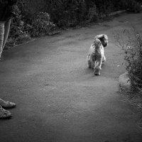 Собачья прогулка :: Iylami Misanaro
