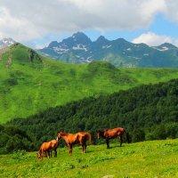 Ах, вы кони, мои кони.... :: Геннадий Ячменев