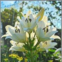 Лилии в саду :: Мила Раменская (Забота)