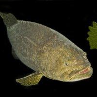 Вместо  золотой рыбки..) :: Барбара