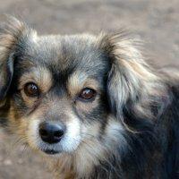 Бездомные животные :: ксения Олейник
