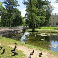 Александровский сад и дворец :: Наталья