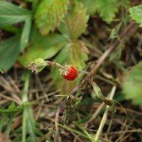 в лесу :: Yulia Sherstyuk