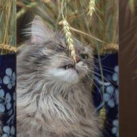 триптих с котом. :: Виктор Грузнов