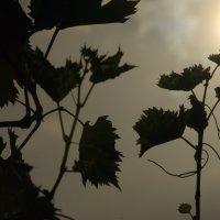 Тянемся к солнцу.. :: ФотоЛюбка *