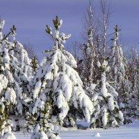 Зимушка зима :: Алла ZALLA
