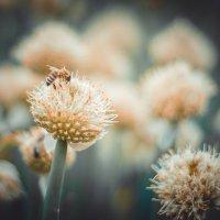пчелки :: Юрий Крутский