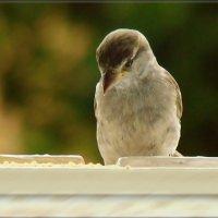 жду! :: linnud
