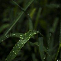 после дождя :: Алена Юрченко