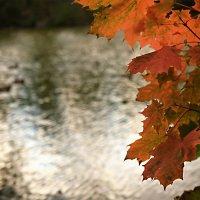Скоро осень, за окнами август... :: Юрий Вайсенблюм