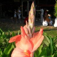 Цветок :: mobyalta