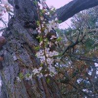 Последняя весна... :: Юрий Поляков