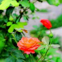 Цветы умеют говорить... :: Юрий Гайворонский