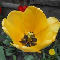 Цветы :: Кристианна Дробышева
