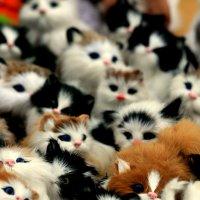 Планета кошек, котов и котят. :: юрий