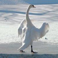 А мне летать,а мне летать,а мне летать... охота! :: Наталья